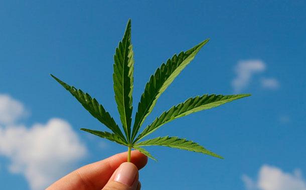 El cannabis medicinal espera la regulación para empezar a funcionar