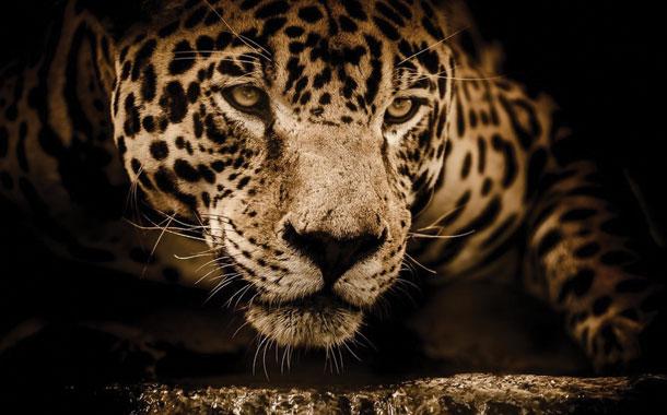 Mujer fue atacada por un jaguar en México