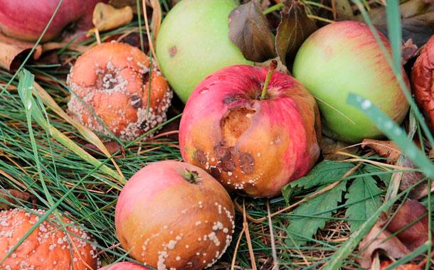 Reducir el desperdicio de comida es relativamente simple