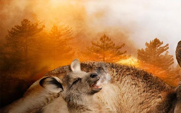 Especies que están en peligro por los incendios de Australia
