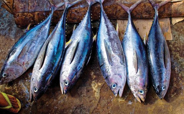 Empresario paga increíble cantidad por un atún