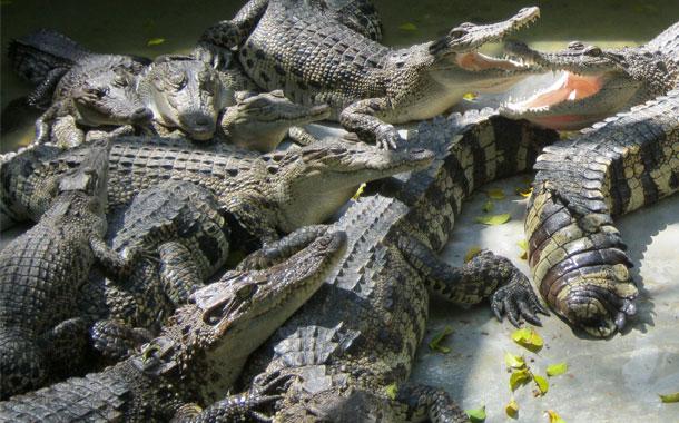 Un australiano sobrevive tres semanas en un bosque infestado de cocodrilos