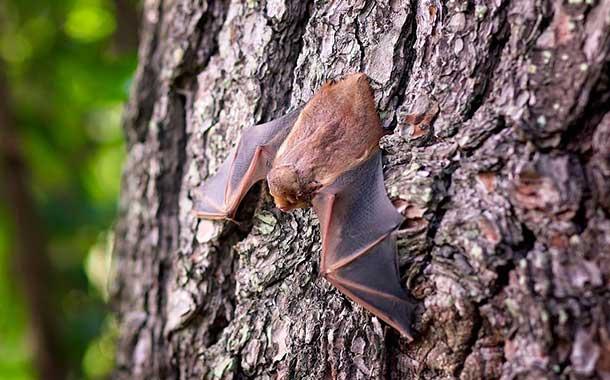 La sopa de murciélago a la que relacionan con el coronavirus
