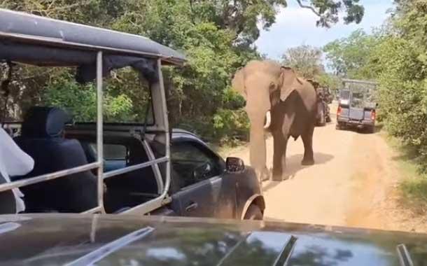 Elefante detiene vehículo de turistas para 'robarles' la comida