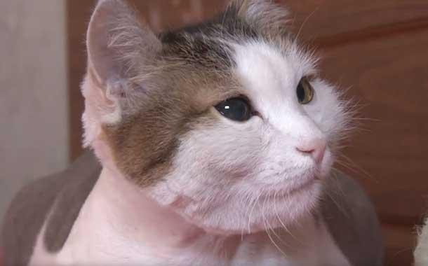 Con una mordida, gato salva a su dueña de incendio