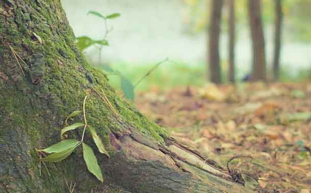 Ecuador busca padrinos para reforestar