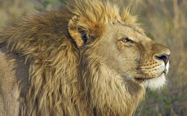 Joven murió atacada por leones