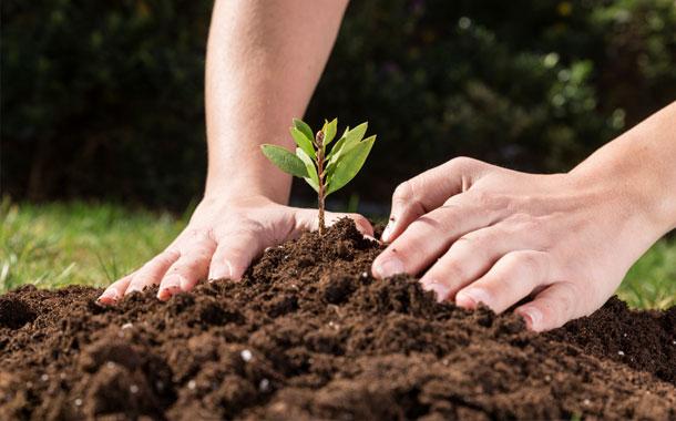 Autoridades y ciudadanos se unen para cuidar el medio ambiente