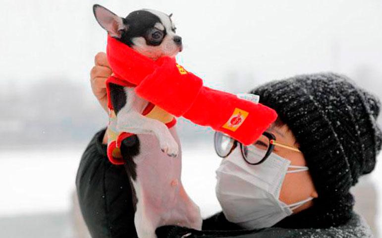 Organización Mundial de la Salud señala que mascotas no transmiten coronavirus a humanos