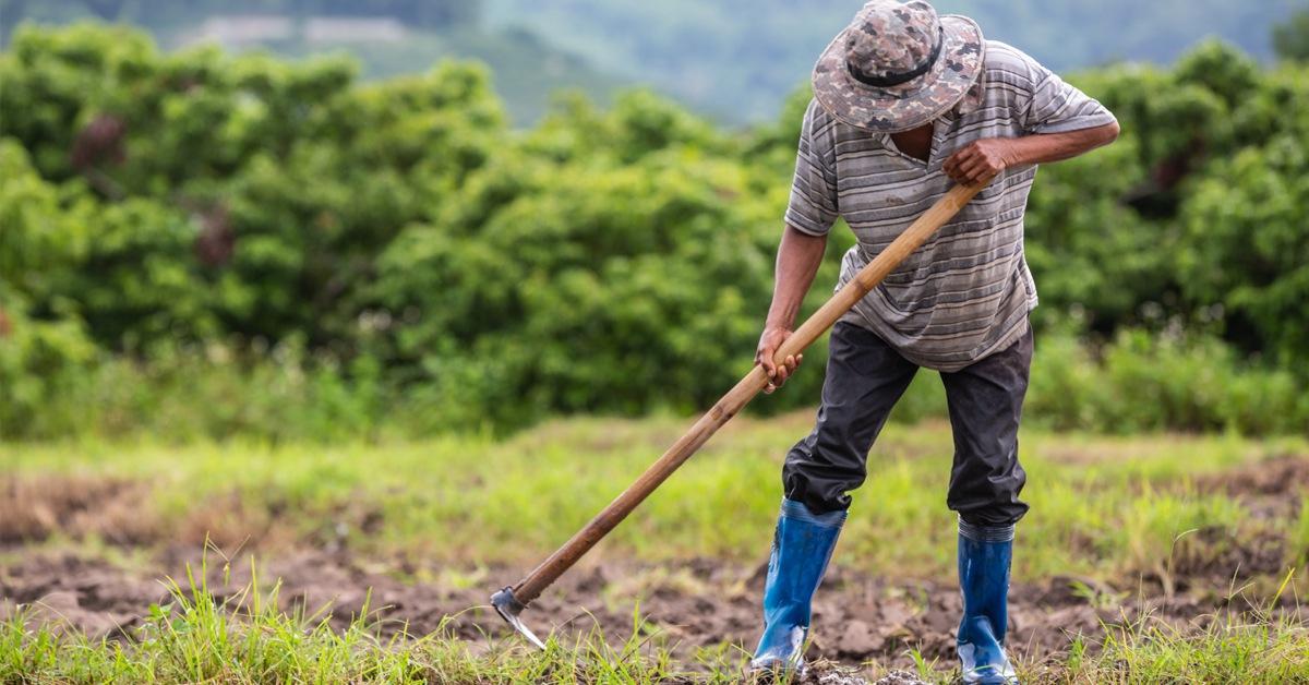 Las actividades en el sector agrícola y ganadero no se detienen
