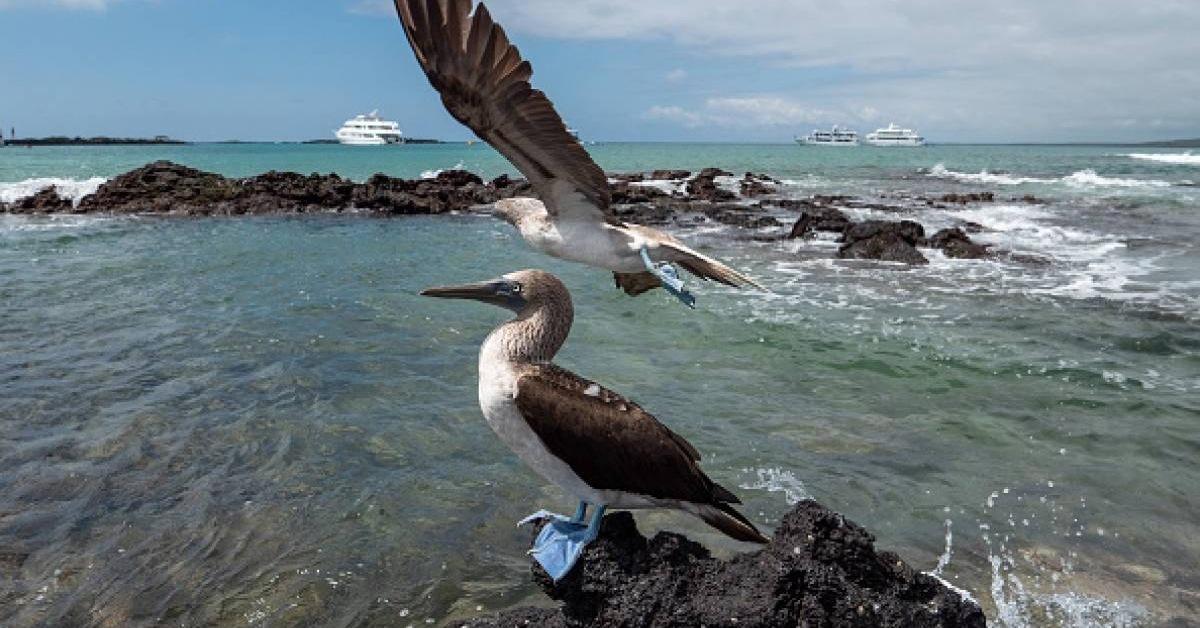 Cuatro casos confirmados de COVID-19 en las islas Galápagos