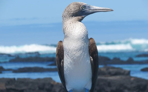 Las Islas Galápagos registran cuatro casos positivos de Covid- 19