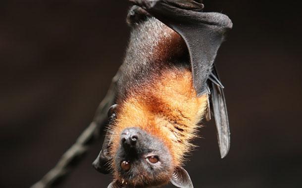En China continúan vendiendo murciélagos pese al peligro sanitario por el coronavirus