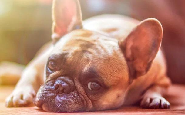 Consejos para evitar que el asilamiento afecte a tu perro
