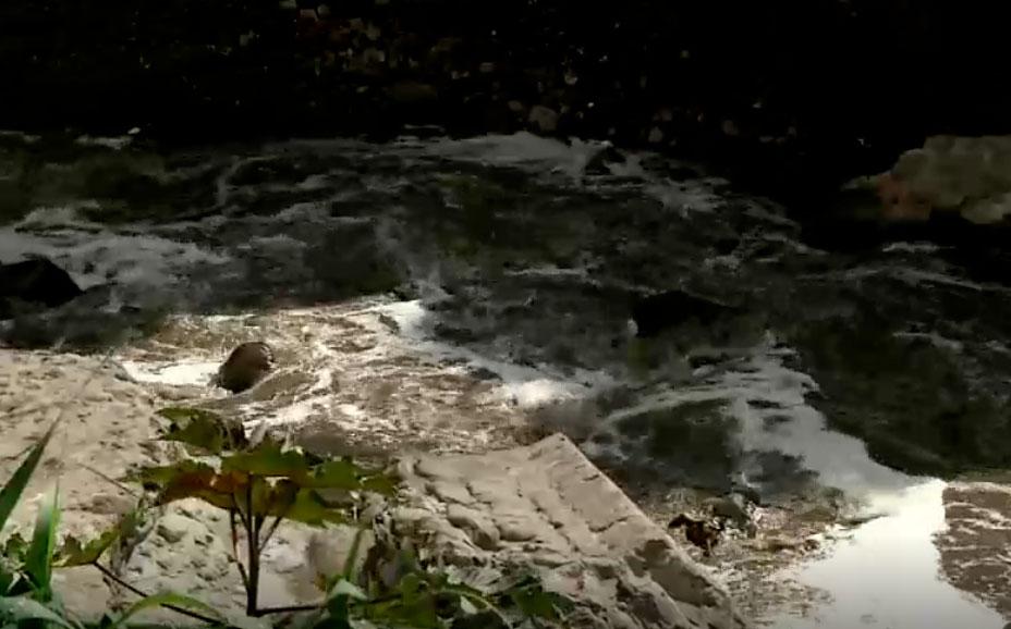 Alerta por aumento de caudal y taludes en el río Monjas