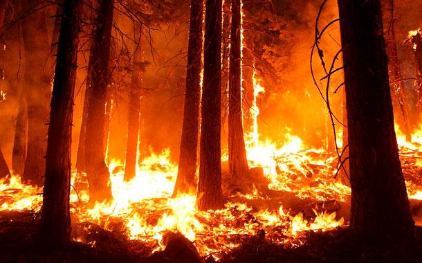 Los incendios forestales en Honduras ya han arrasado 14.935 hectáreas