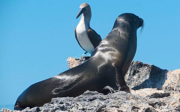 Se incrementan los casos de coronavirus en las Islas Galápagos
