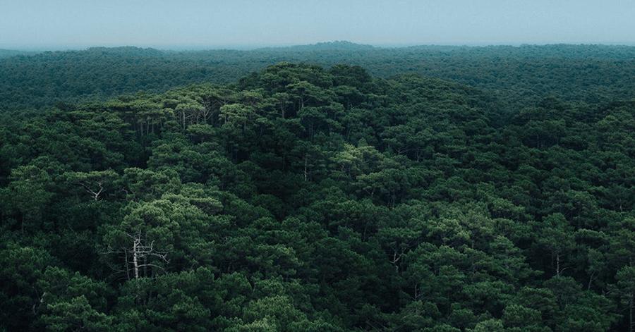 La Amazonía está en tal peligro que el próximo virus