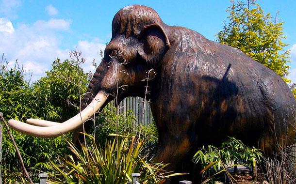 Hallazgo de 60 mamuts da pistas de su extinción
