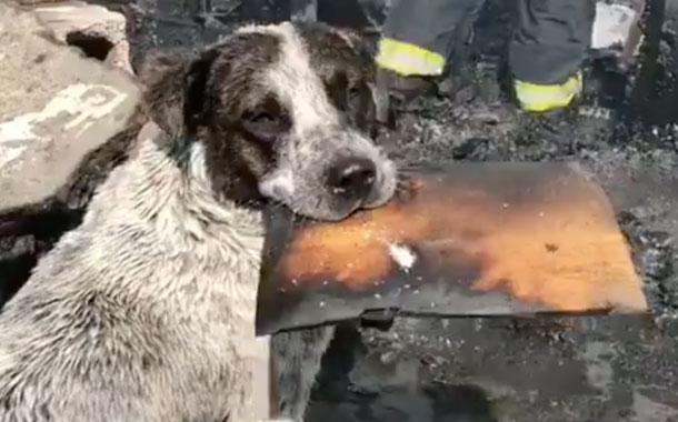 Perro llora al ver su hogar destruido por un incendio