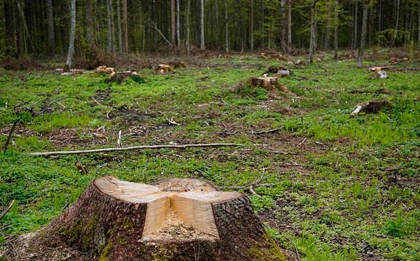 Tala de árboles preocupa a los moradores de la Mena de Hierro