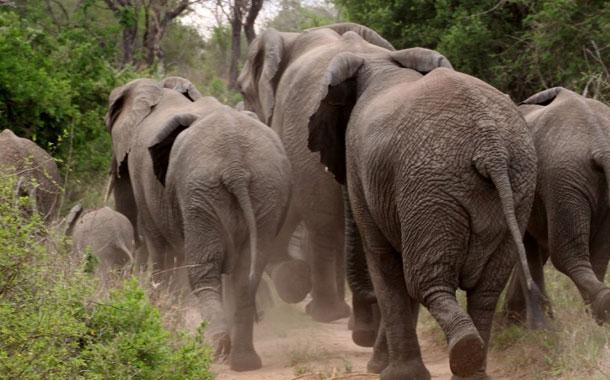 Elefantes arremeten contra un grupo de turistas en Sri Lanka