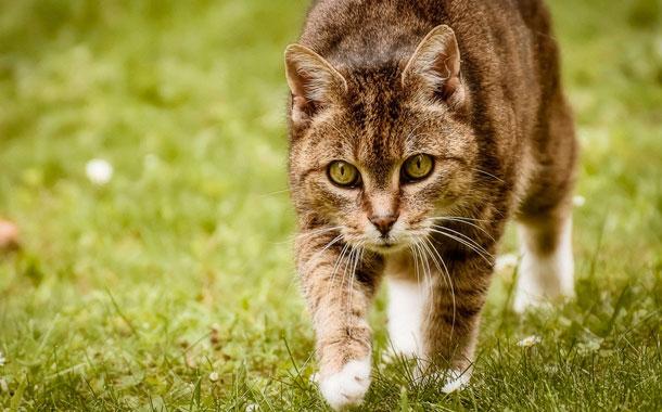 Gato muerde a su dueña y muere poco después por un extraño virus