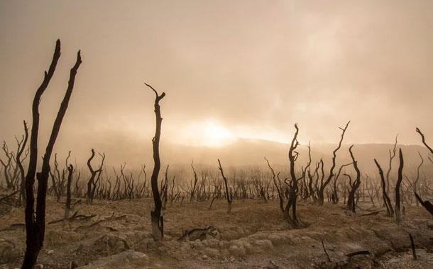 La deforestación en la Amazonía brasileña en 2019 fue la mayor en 11 años