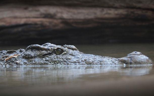Un cocodrilo mató a una mujer que pescaba en Indonesia