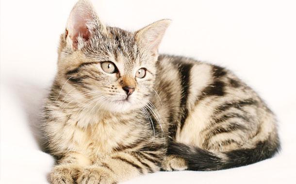 Gato regresa a su casa con una contundente nota en su collar (FOTO)