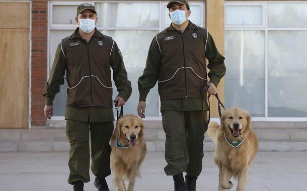 Perros entrenados para detectar enfermos con Covid-19