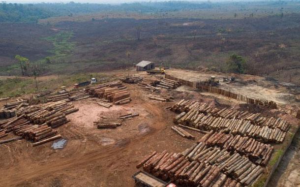 Corporaciones piden frenar tala ilegal en Amazonía