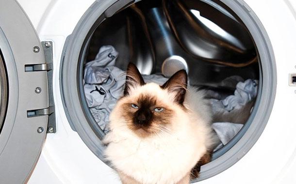 Un gato sobrevivió tras pasar 12 minutos dentro de una lavadora