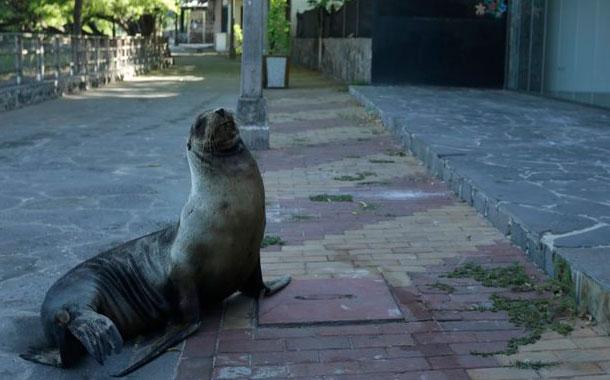 Islas Galápagos abren sitios de visita al turismo mundial