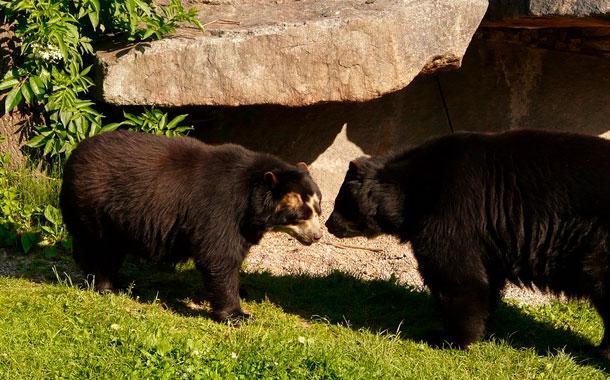 Por tu Salud: Reapertura de zoológicos seguros