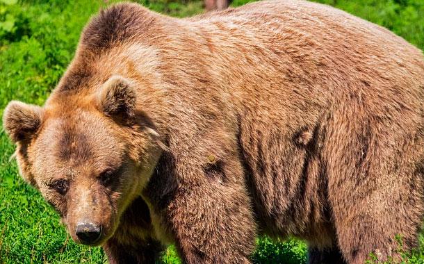 La foto junto a un oso que casi le cuesta la vida