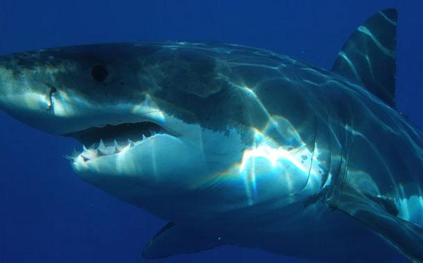 Tiburón fue fotografiado cuando dio un salto de cinco metros