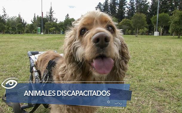 Animalitos con discapacidad