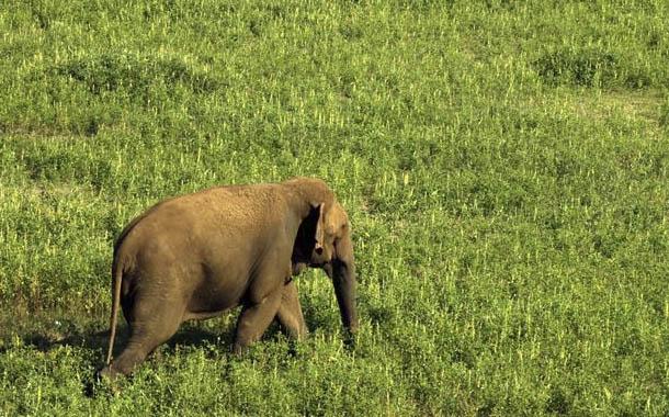 El Día Mundial del Elefante trae importantes cifras