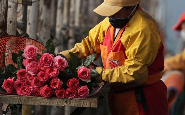 Covid agrava escenario de exportación de flores ecuatorianas