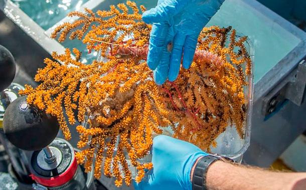 Descubren 30 nuevas especies de invertebrados marinos en Galápagos