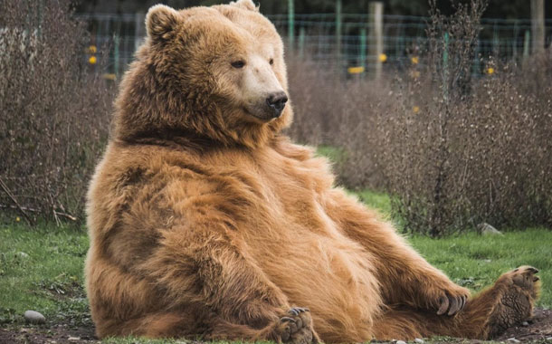 Una tienda recibe la visita de un oso que se llevó un bocadillo