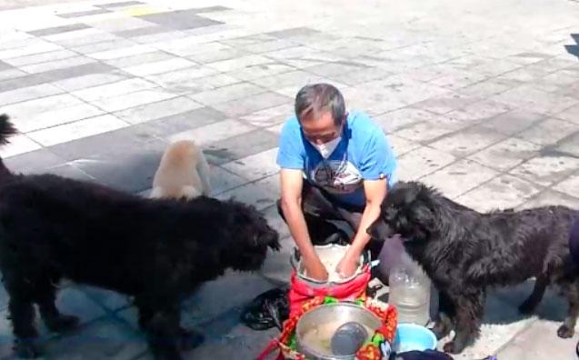 Don Gonzalo alimenta y cuida a más de 60 perros y gatos
