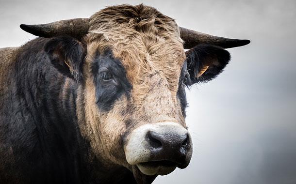 Un toro ataca a un niño en medio de la vía pública en la India