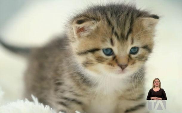 #PorTuSalud: ¿Qué animales portan el coronavirus?