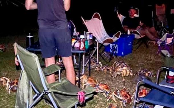 Cangrejos gigantes invaden una parrillada familiar