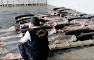 Decomisan 11 toneladas de tiburones mutilados procedentes de Ecuador