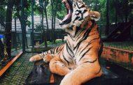 Prohíben uso de animales salvajes en los circos ambulantes en Francia