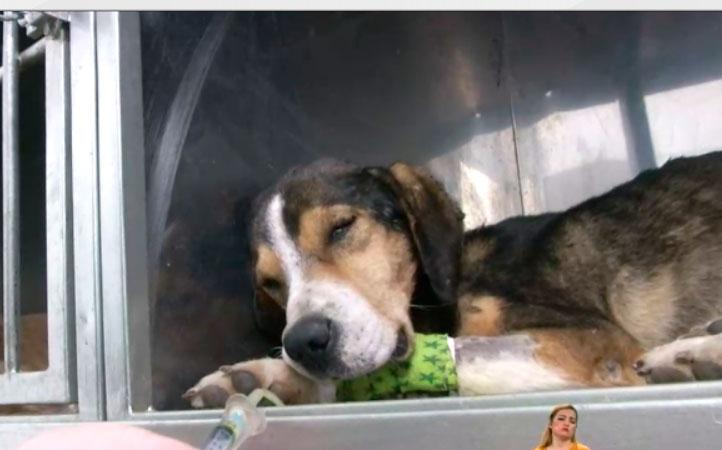 Una llamada alertó sobre un perrito que habría sido atacado a machetazos