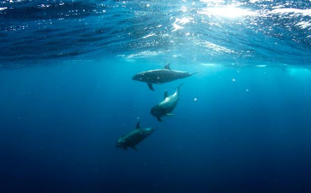 Muere delfín al tratar de salvar a su cría de un derrame de crudo